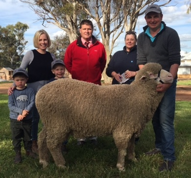 Lot 1 - Sold to Alex & Stephanie Willson of Kalaree Poll Merinos, Crookwell NSW for $16,000