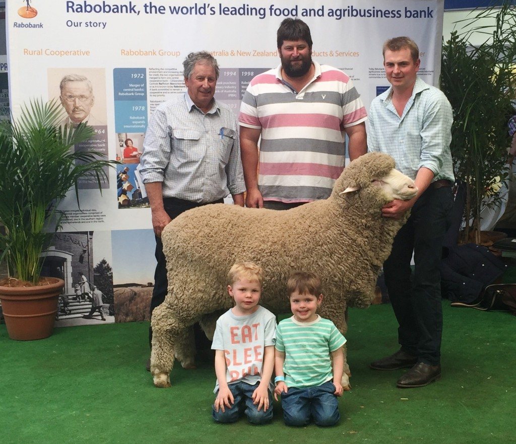 B 235 Sold to Ian & Nick Woods, Woodoona Stud, Karoonda, SA